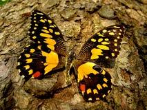 Sluit omhoog op een vlinder Royalty-vrije Stock Foto's