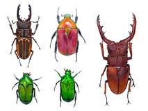 Sluit omhoog op geïsoleerde kevers of insecten royalty-vrije stock afbeelding