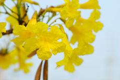 Gele Bloem in de zomer Stock Foto
