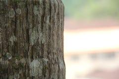Sluit omhoog op grijze boom met delen van groen mos stock foto's