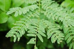 Sluit omhoog op groene bladeren met regendruppels op hun bladeren, regenachtige dag op groene bladeren stock foto's