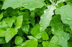 Sluit omhoog op groene bladeren met regendruppels op hun bladeren, regenachtige dag op groene bladeren stock fotografie