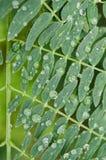 Sluit omhoog op groene bladeren met regendruppels op hun bladeren, regenachtige dag op groene bladeren stock afbeelding