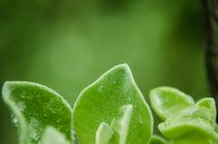 Sluit omhoog op groene bladeren met regendruppels op hun bladeren, regenachtige dag op groene bladeren stock afbeeldingen