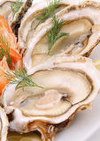 Sluit omhoog op oester Royalty-vrije Stock Afbeeldingen