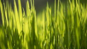 Sluit omhoog op onscherp gras met zonlicht die door bereiken stock foto