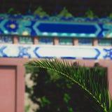 Sluit omhoog op palmblad; Chinese geschilderde architectuur op achtergrond stock foto