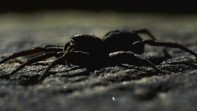 Sluit omhoog op spin in bijlage die zich net bewegen stock videobeelden