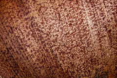 Sluit omhoog Patronen en Texturen van Palmvarenblad royalty-vrije stock afbeelding