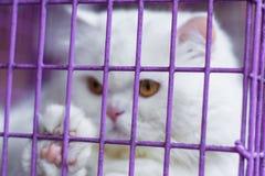 Sluit omhoog Perzische kat in de kooi op vage achtergrond stock foto
