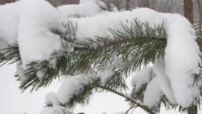 Sluit omhoog pijnboomboom met sneeuw wordt behandeld die stock videobeelden