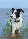 Sluit omhoog portret van gemengde rassenhond stock foto