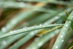 sluit omhoog regendruppels op groen gras, in de ochtend na regen, de zomer stock fotografie