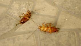 Sluit omhoog reusachtige kakkerlakkendoden op de vloer buiten royalty-vrije stock afbeelding