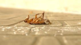 Sluit omhoog reusachtige kakkerlakkendoden op de vloer buiten stock fotografie