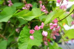Sluit omhoog Roze bloemen op vage tak en bladerenachtergrond royalty-vrije stock afbeelding