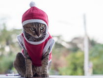 Sluit omhoog Santa Ordinary Cat Stock Afbeeldingen