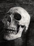 Sluit omhoog schedelgezicht op houten Royalty-vrije Stock Foto's