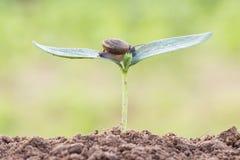Sluit omhoog slak op zaadjonge plant stock afbeeldingen