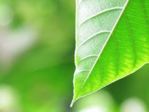 Sluit omhoog textuur en patroon van groen blad royalty-vrije stock foto's
