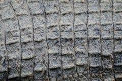 Sluit omhoog textuur van de levende achtergrond van de krokodilhuid Het patroon van de krokodilhuid van levend lichaam stock foto