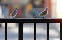 Sluit omhoog twee vogels vastklampt zich aan de omheining royalty-vrije stock fotografie