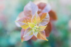 Sluit omhoog van één enkele bloem Royalty-vrije Stock Afbeeldingen