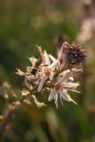 Sluit omhoog van Arbeidersbij die een Wildflower bestuiven tijdens de Lente Stock Afbeeldingen