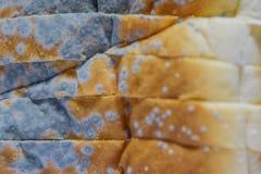 Sluit omhoog van beschimmeld brood, verliep kan niet any more eten omdat het voor gezondheid schadelijk is stock afbeelding