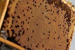 Sluit omhoog van bijenkam met eieren, kroost zonder bijen royalty-vrije stock fotografie