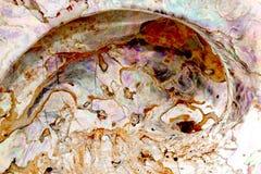 Sluit omhoog van binnen van Abalone Shell With Mother-Of-Pearl Royalty-vrije Stock Fotografie