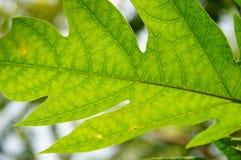 Sluit omhoog van bladeren Stock Afbeelding