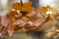 Sluit omhoog van bladeren in boom Stock Afbeeldingen