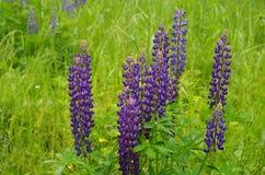 Sluit omhoog van blauwe bloemen op een groene achtergrond stock fotografie