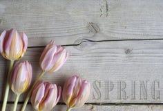 Sluit omhoog van bloeiende tulpen op houten achtergrond, met de tekstlente stock foto