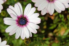 Sluit omhoog van bloem? Stock Afbeeldingen