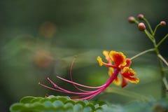 Sluit omhoog van bloem Stock Foto's