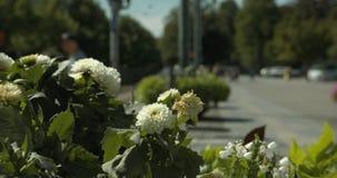 Sluit omhoog van bloemen bij de centrale post van Norrköping met vage mensen op de achtergrond stock video