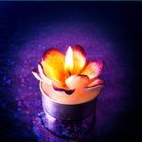 Sluit omhoog van bloemkaars Stock Afbeeldingen