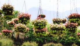 Bloempotten in het park Stock Foto