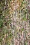 Sluit omhoog van boom Stock Afbeelding
