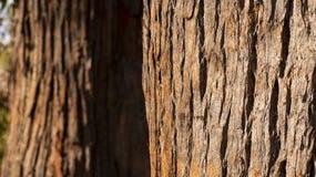 Sluit omhoog van boomboomstam en zijn geweven schors stock afbeelding