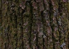 Sluit omhoog van boomschors Stock Foto's