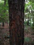 sluit omhoog van boomstam stock afbeelding