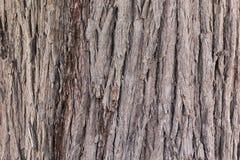 Sluit omhoog van boomstam van boom binnen royalty-vrije stock fotografie
