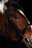 Sluit omhoog van bruin paardoog Royalty-vrije Stock Foto