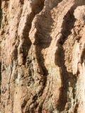 sluit omhoog van buitenkinaboomtextuur buiten oude nationaal bederftijd stock afbeeldingen