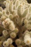 Sluit omhoog van cactus Stock Foto's