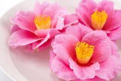 Sluit omhoog van cameliabloemen Stock Afbeeldingen