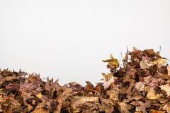 Sluit omhoog van dalingsbladeren Stock Afbeeldingen